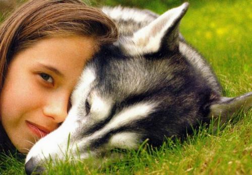 Se abre a información pública el Anteproyecto de la Ley de protección y tenencia de animales de compañía de Canarias