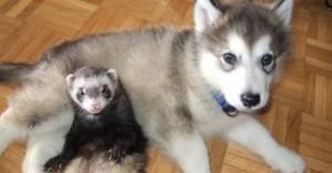 animales-que-pueden-ser-amigos-de-los-perros_yt8nj