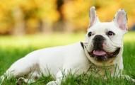 antioxidantes-para-mejorar-la-calidad-de-vida-de-las-mascotas_9zat3