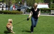 aprende-a-caminar-con-tu-perro_0zpud