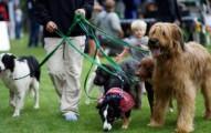 aprende-a-pasear-a-tu-cachorro_6jq7a