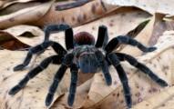 aranas-y-otros-insectos-como-mascotas_tc1mh