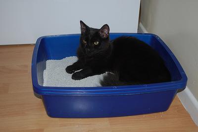 Arena ecológica para nuestro gato