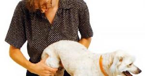 artrosis-canina-y-su-tratamiento_ht6sw