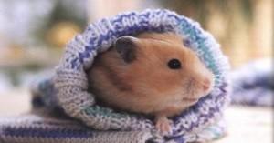 aseando-a-nuestro-hamster_0i7mu