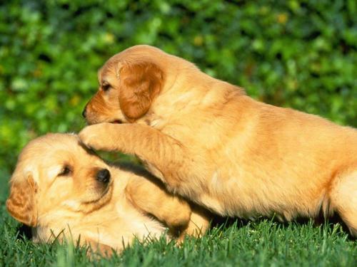 Ayudando a socializar al perro