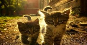 beneficios-de-adoptar-dos-gatitos-en-el-hogar_4861r