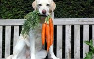 beneficios-de-las-zanahorias-en-la-dieta-de-las-mascotas_8w9j0