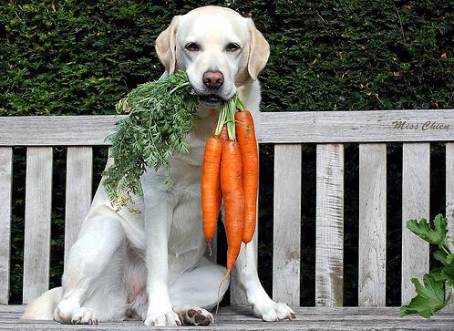 Beneficios de las zanahorias en la dieta de las mascotas