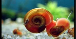caracoles-en-el-acuario_az7bi