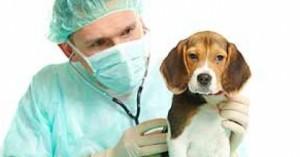 cardiopatias-en-perros-y-gatos_hxsp3