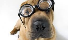 causas-de-los-sangrados-por-la-nariz-en-perros_xreht