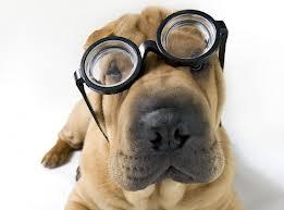 Causas de los sangrados por la nariz en perros