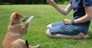 cinco-pasos-para-entrenar-a-tu-perro_yudkm