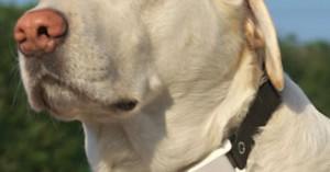 collares-antiladridos-inofensivos-para-controlar-el-escandalo-de-tu-perro_i18jb