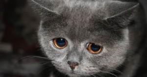 combatiendo-la-depresion-en-los-gatos_xm9ul