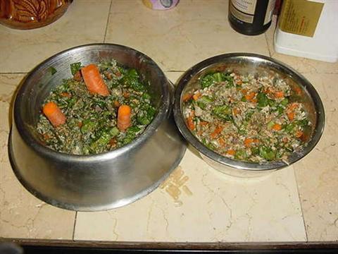 Comidas caseras para nuestro perro canal mascotas for Ideas para comidas caseras