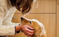 como-acariciar-las-orejas-de-mi-perro_thnyc