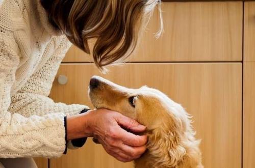 Como acariciar las orejas de mi perro