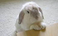 como-adiestrar-a-un-conejo_etm79