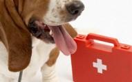 como-atender-a-nuestro-perro-en-caso-de-emergencia_46yp0