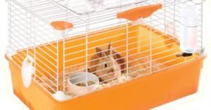 como-cuidar-un-conejo-enano-en-casa_lm0wk