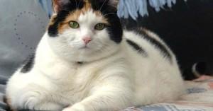 como-descubrir-que-mi-gato-tiene-sobrepeso_z2l4s