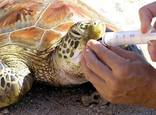 ¿Cómo descubrir si la tortuga esta enferma?