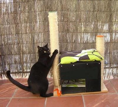 Como elaborar un rascador casero para gatos