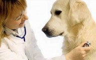 como-elegir-el-mejor-veterinario-para-nuestra-mascota_4o5lw