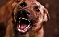 como-evitar-los-ataques-de-los-perros_sr83c
