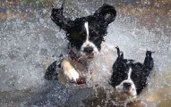 como-evitar-los-golpes-de-calor-en-las-mascotas_obkve