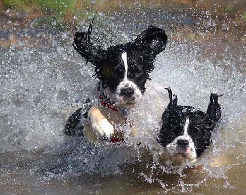 Cómo evitar los golpes de calor en las mascotas