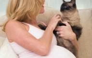 como-hacer-que-nuestro-gato-sea-parte-del-embarazo_5k3re