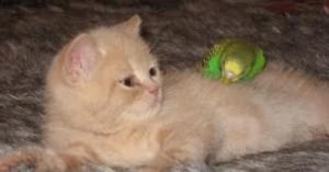 como-incorporar-un-gato-a-la-familia_qsy26
