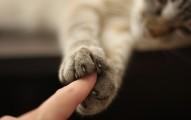 como-le-corto-las-unas-a-mi-gato_vg8o3