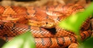 como-logran-moverse-las-serpientes_4fi5v