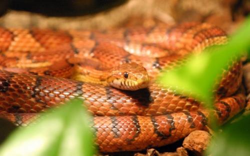 ¿Cómo logran moverse las serpientes?