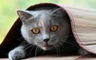 como-lograr-que-el-gato-no-le-tenga-miedo-a-su-jaula-de-transporte_q1g5r