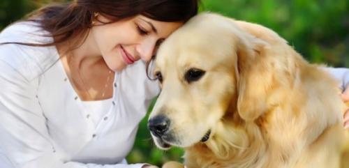 Como lograr un pelaje brillante en perros