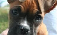 como-presentarse-al-nuevo-cachorro_m9fga