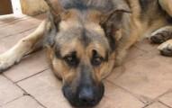 como-puedo-ayudar-a-los-perros-y-gatos-abandonados_7buyq