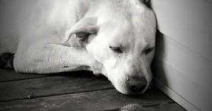 como-saber-si-mi-perro-esta-deprimido_lni5e