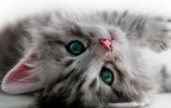como-saber-si-un-gato-esta-sano_a8zhg