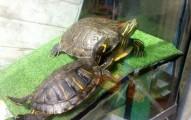 como-tener-un-reptil-en-casa_s9yzx