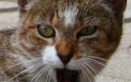 como-tratar-un-gato-enfadado_rh7k8
