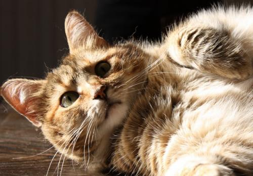 Comportamientos curiosos de los gatos