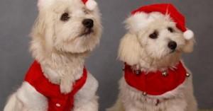 compra-en-navidad-un-nuevo-collar-para-tu-perro_hibpr