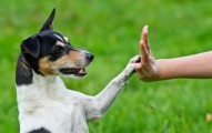 comunicacion-y-observacion-entre-mascotas-y-duenos_y2mrh