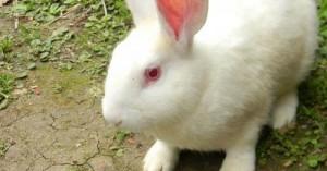 comunicandonos-con-nuestro-conejo_5ae4p